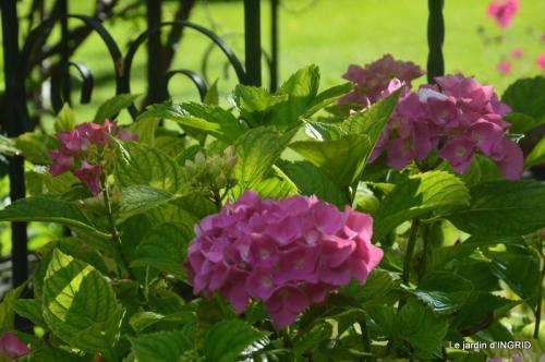 mon jardin,dégats buis, 084.JPG
