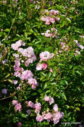 fleurs,roses,le cygne,les pts fruits 019.JPG