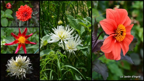 2014-06-20 jardin,chez Bernadette,libellules,bouquets de mariée.jpg