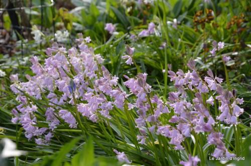 mésanges,escargots,ros. de banks,abeilles,Monpazier,Banes,Forêt 050.JPG