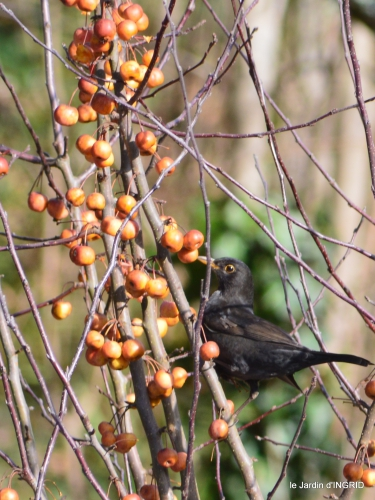 oiseaux,grotte du coulobre 097.JPG