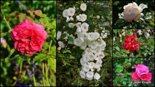 2014-08-19 jardin le matin,la mare2.jpg