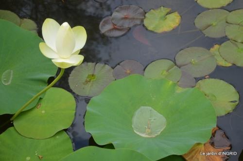 orage,puces,bouquet,Anniv.Ines,Brantome,Jardins d'eau 245.JPG