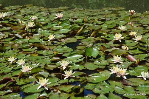 le jardin de Frescati,roses 044.JPG