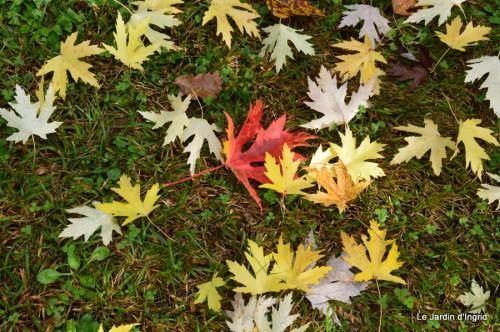 automne,arbres,inondation 092.JPG