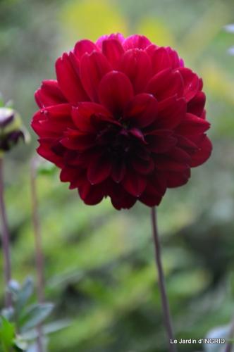 jardin,puces Lasmonzie,asters 066.JPG
