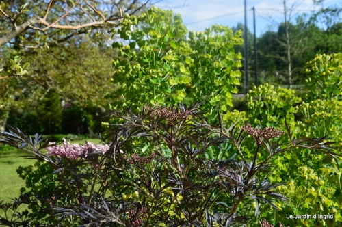 jardin avril et mai, 126.JPG