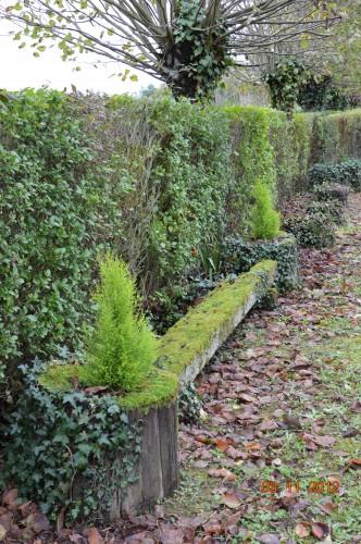 Ciron,feuilles d'automne,safran,taille érable 025.JPG