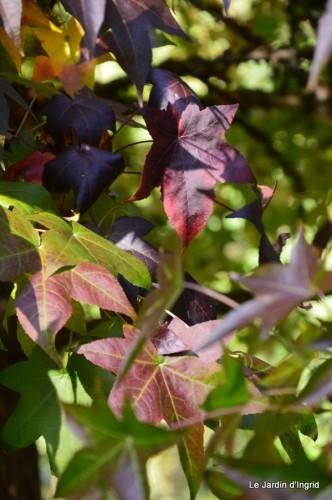 sauges,plectanthrus,Romane,canal,manthe r.,automne 164.JPG