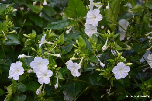 Fleurettes,Dordogne,jardin 127.JPG