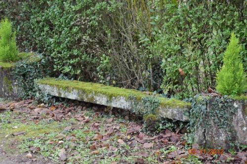 Ciron,feuilles d'automne,safran,taille érable 027.JPG