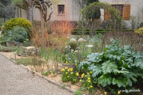 paillage,primevères,jonquilles,jardin 036.JPG