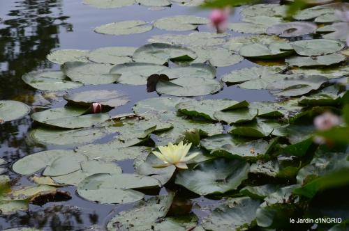 bouquet,jardin de Monet,les vaches,Pourville sur mer 132.jpg
