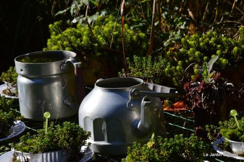 ménage automne,plectanthrus,feuillages 012.JPG