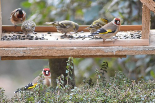 les oiseaux sur terrasse 041.JPG