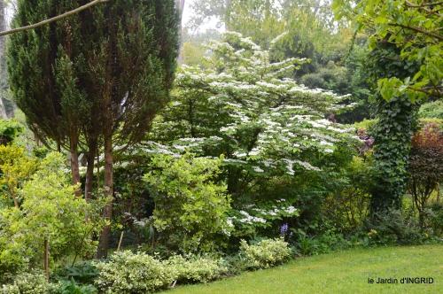 rosier de banks,jardin,cygnes,osier 061.JPG