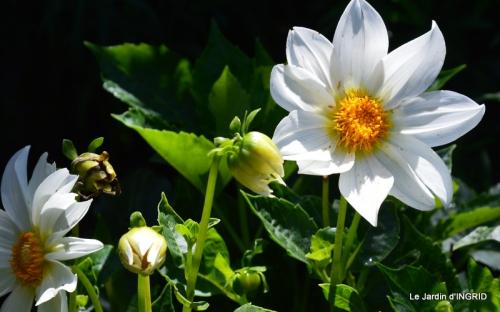 confiture,bouquet,petit jardin 019.JPG