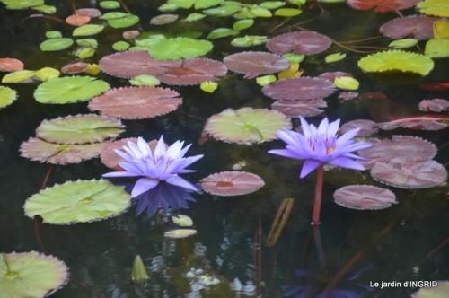 orage,puces,bouquet,Anniv.Ines,Brantome,Jardins d'eau 325.JPG