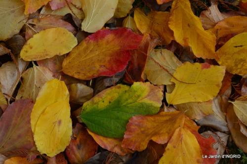 Romefort,bord de Creuse,vent,feuilles,jardin,canal 165.JPG