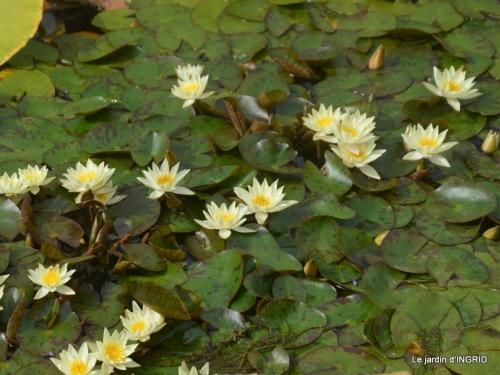orage,puces,bouquet,Anniv.Ines,Brantome,Jardins d'eau 285.JPG