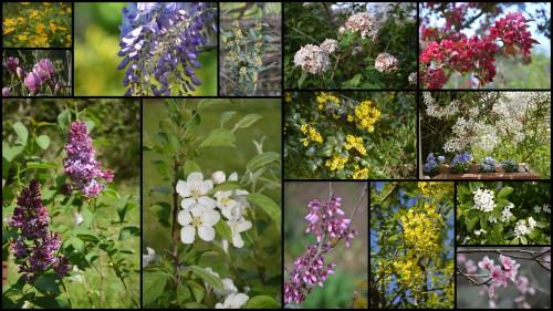2013-04-26 zoom sur fleur printemps.jpg