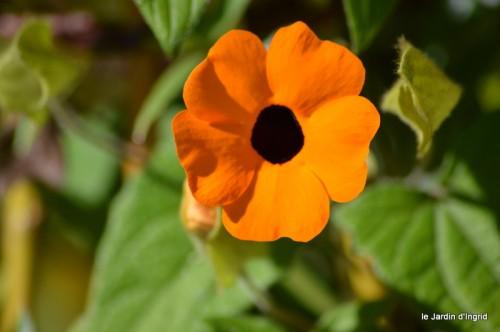 coeur des fleurs,papillons,libellules 155.JPG