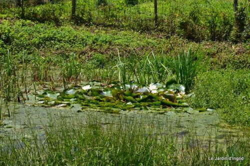 la mare,pt jardin,passiflore,Sophie,le canal,vues jardin 055.JPG