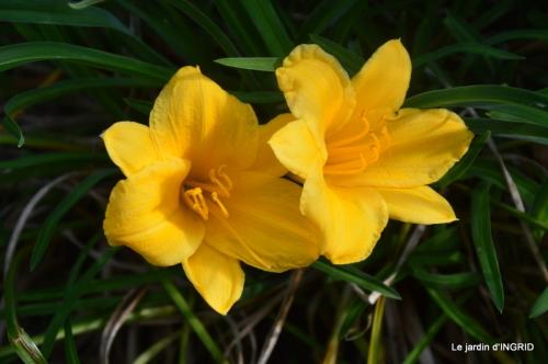 lantanas,jardin aout, 049.jpg
