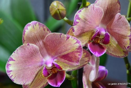 Orchidées,Noel jardiland,lever du soleil 024.JPG