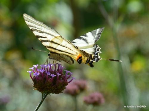 libellules,papillon,jardin,Froidefond,David,Meyrals 028.JPG