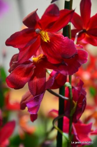 Orchidées,Noel jardiland,lever du soleil 038.JPG