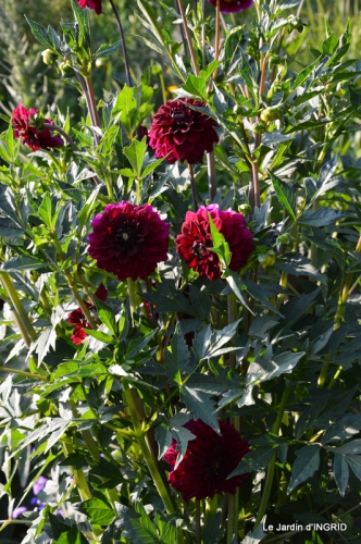 jardin juin,cabane,bouquet 081.JPG