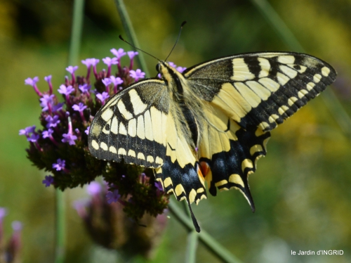 jardin,papillons,anniversaire d'Ines,bricolage 117.JPG