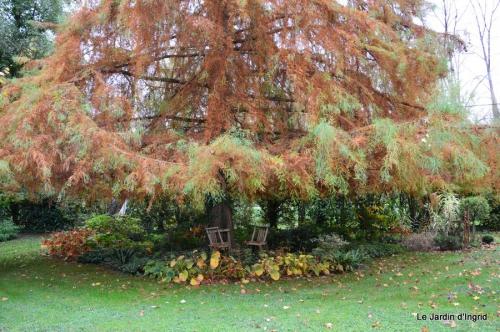 jardin automne ,travaux feuilles 042.JPG
