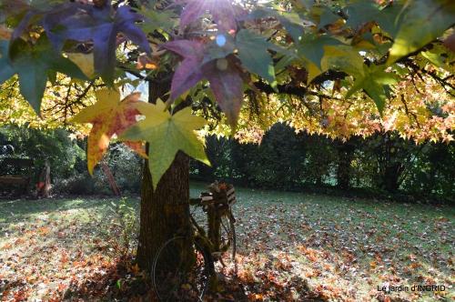 automne, décos cucurbitacées,jardin 010.JPG