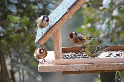 les oiseaux sur terrasse 039.JPG