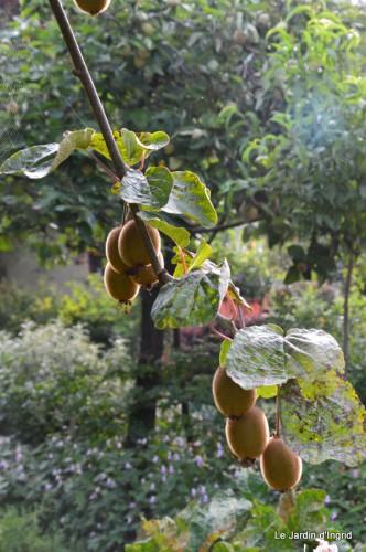 tournesols,pt jardin,nénuphard,libellules,lavande bouquet,carava 044.JPG