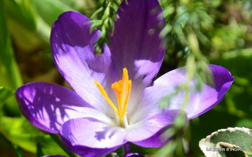 jardinière,insectes,achats 021.JPG