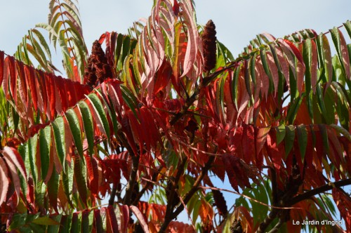 sauges,plectanthrus,Romane,canal,manthe r.,automne 062.JPG