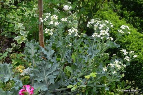 roses,jardin,Le Fleix,bleu 055.JPG