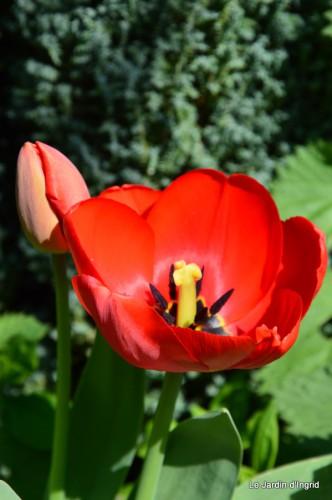 tour du jardin printemps 033.JPG