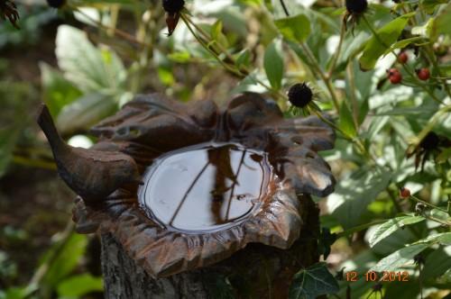 champignons,citrouilles,st Mayme de Péreyrol,fuschias,jardin aut 041.JPG