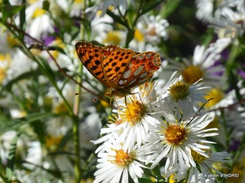 papillons,couleurs d'automne,Bernadette,pluie 057.JPG