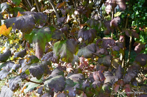 jardin automne,Arya avec Nicky 110.JPG
