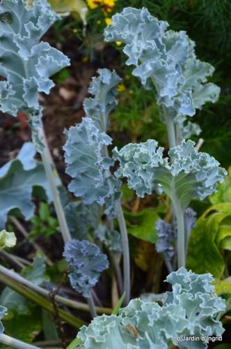 fleurs bleues,hortensia bleu,moi bébé 024.JPG