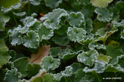 première gelée,décos Noel Jardiland Proflora 054.JPG