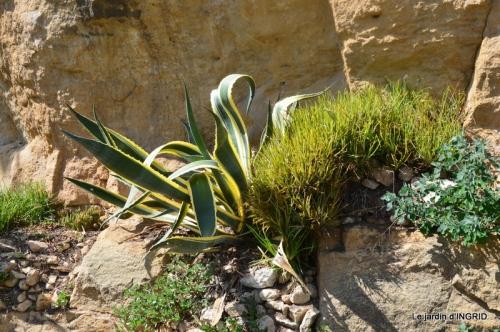 bambous Roque Gageac,jardin,bouquet 199.jpg