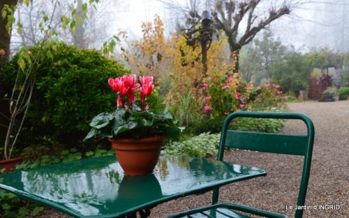 kakis,dernières fleurs,pt jardin,Julie,bassin 020.JPG