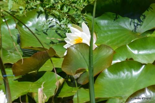 la mare,pt jardin,passiflore,Sophie,le canal,vues jardin 031.JPG