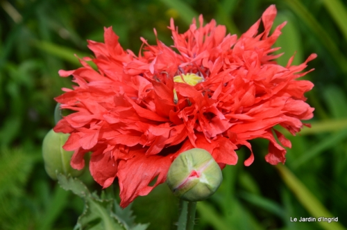 jardin avril et mai, 052.JPG